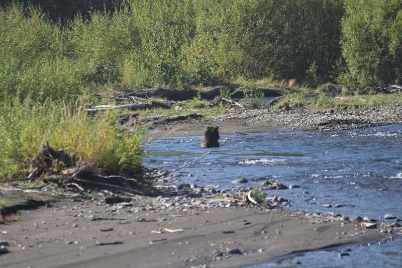 Bear watching in Kamchatka, Russia